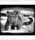Комплект за гравиране – Снежен леопард 2